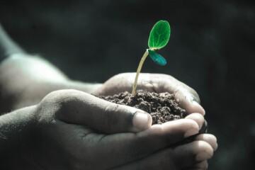Nadzieja: regeneracja