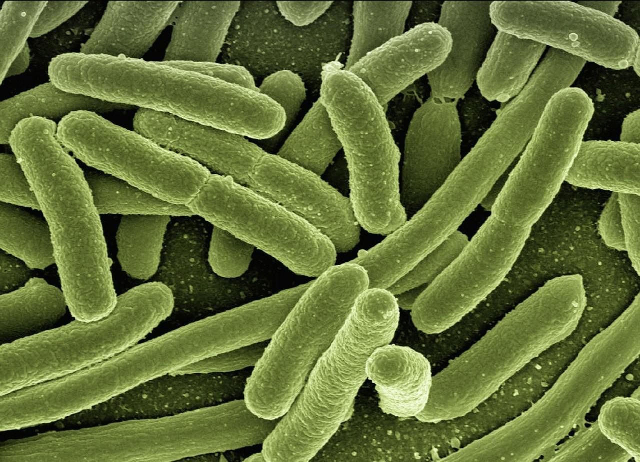 Infekcja? Wirus czy bakteria? Pomoże ci CRP.